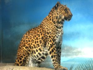 ジャガー と ヒョウ の 違い